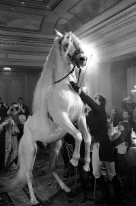 Un cheval à hôtel Fourdeasons.