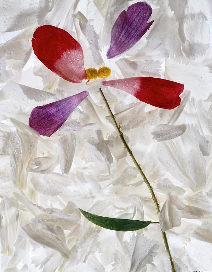 4 pétales de fleurs en couleurs