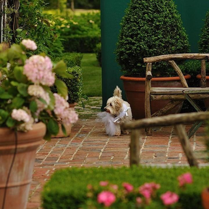 Le chien de la mariée