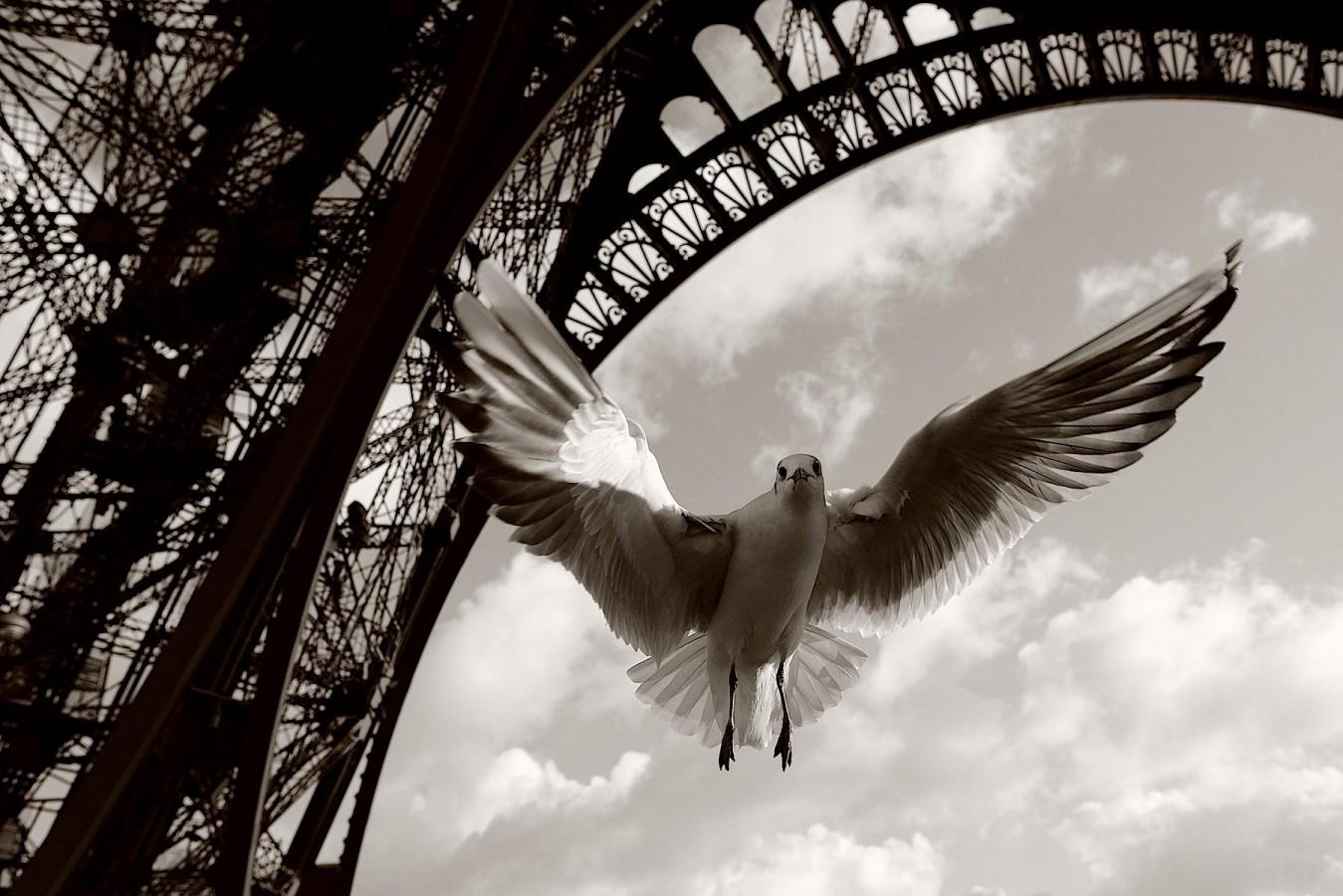 Une mouette sous la tour Eiffel à Paris